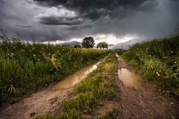 field-thunderstorm-rainy-meadow.jpg